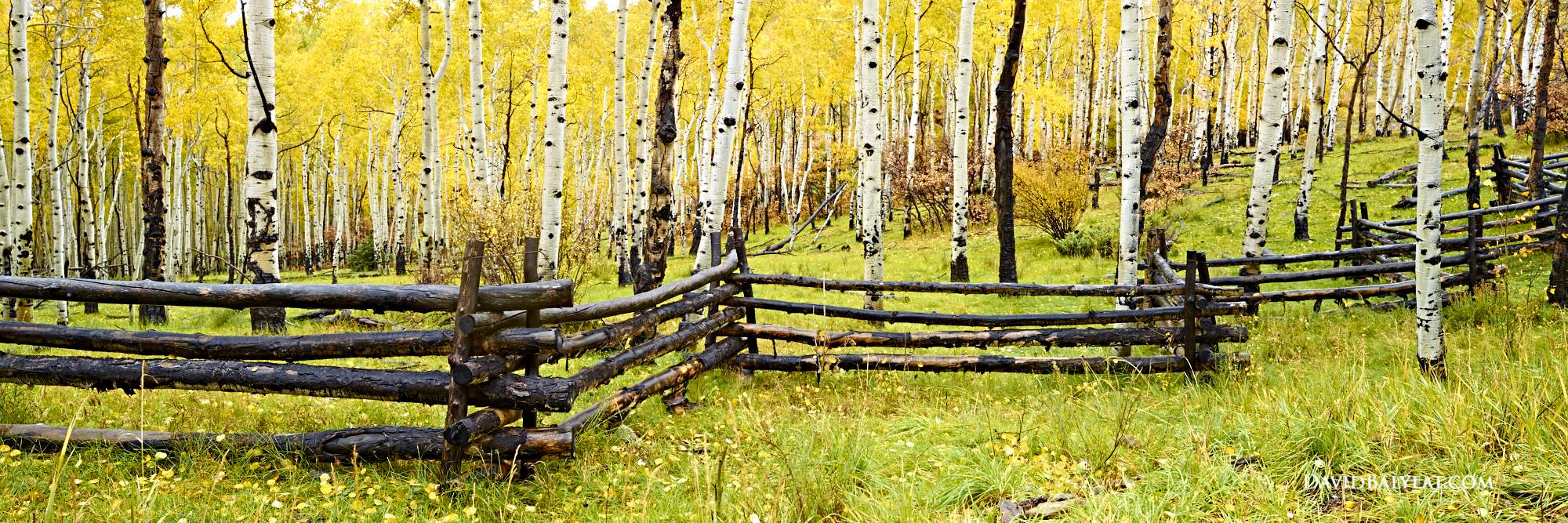 Aspen trees panoramic autumn fall foliage rustic fence Telluride Colorado high-definition HD professional landscape photography