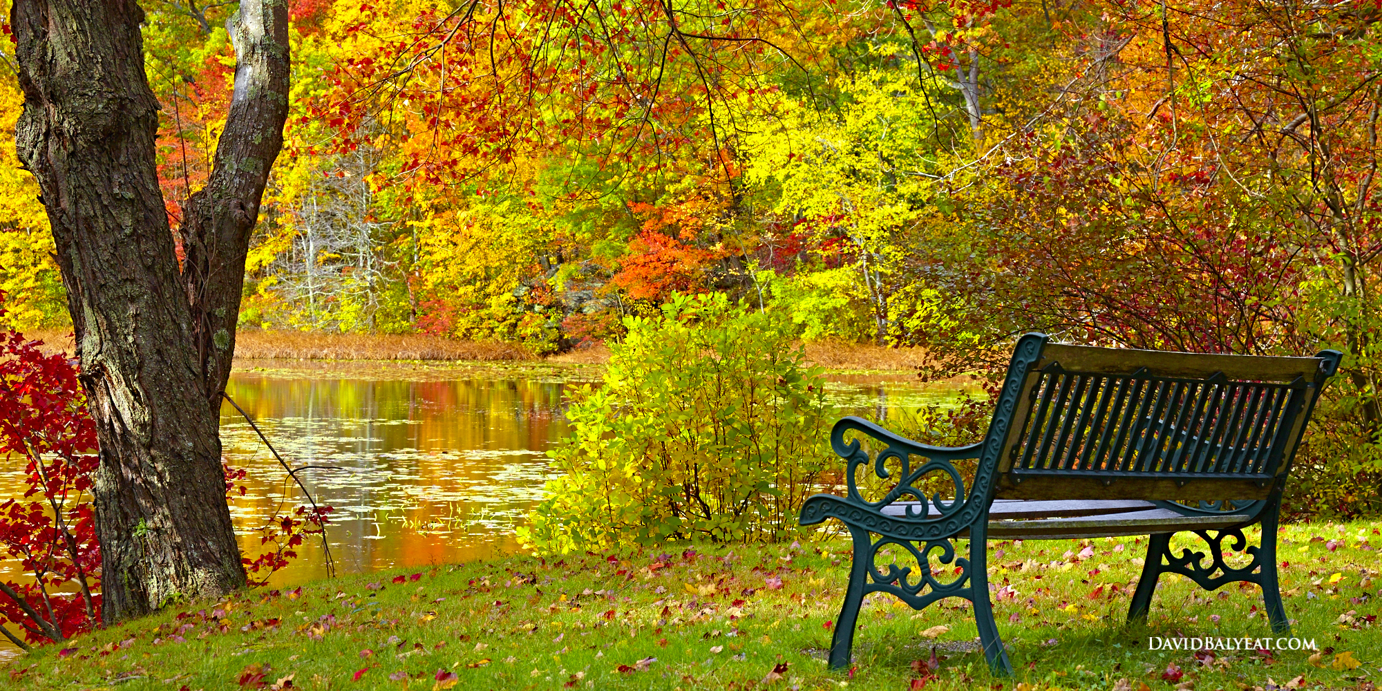 Autumn Bench Connecticut fall foliage scene lake park bench high definition HD photography