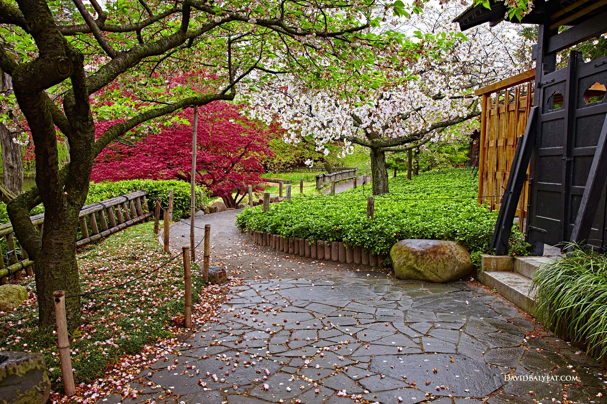brooklyn botanic garden japanese section new york high definition hd professional photography - Garden Definition