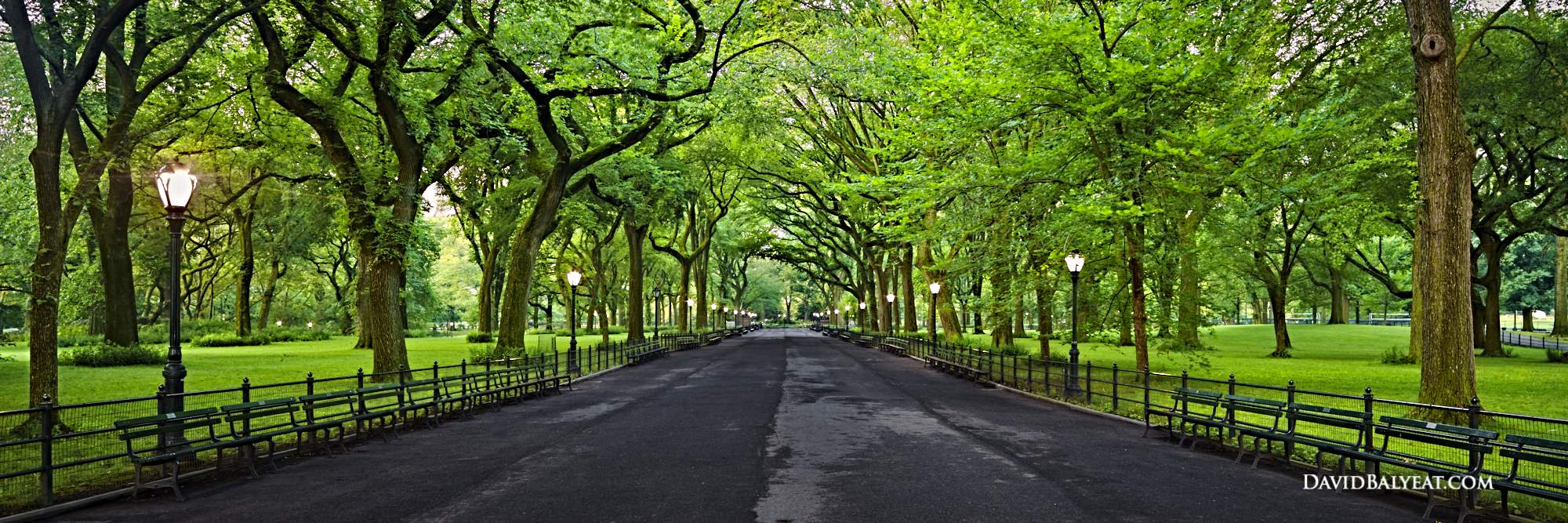 City escape central park david balyeat photography for Professional landscape