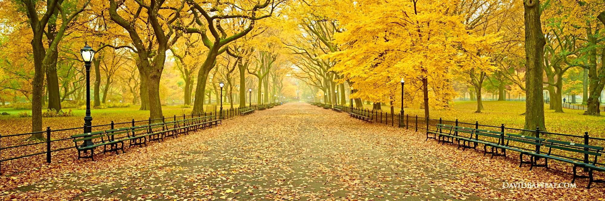 Central Park Panoramic New York City autumn fall foliage literary walk tree-lined mall high-definition HD professional photography