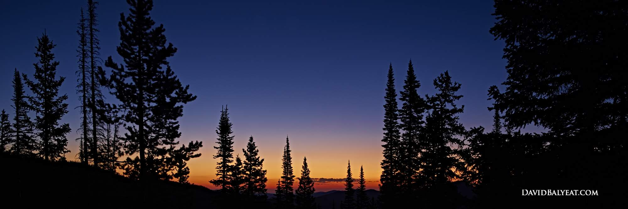 Colorado Sunrise evergreens silhouette panoramic high definition HD photography