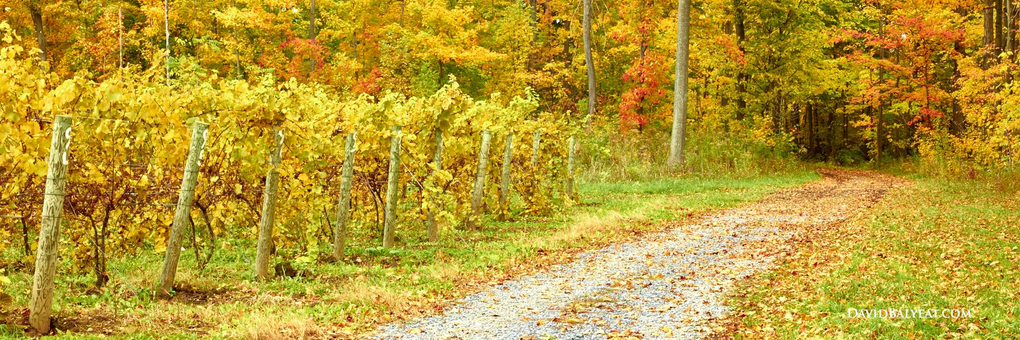 finger lakes vineyard fall harvest autumn panoramic high definition