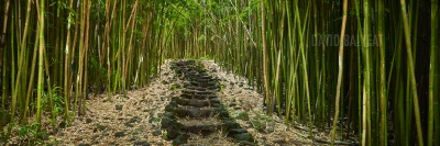 Bamboo forest Hana Haleakala national park Maui Hawaii high-definition HD professional landscape photography