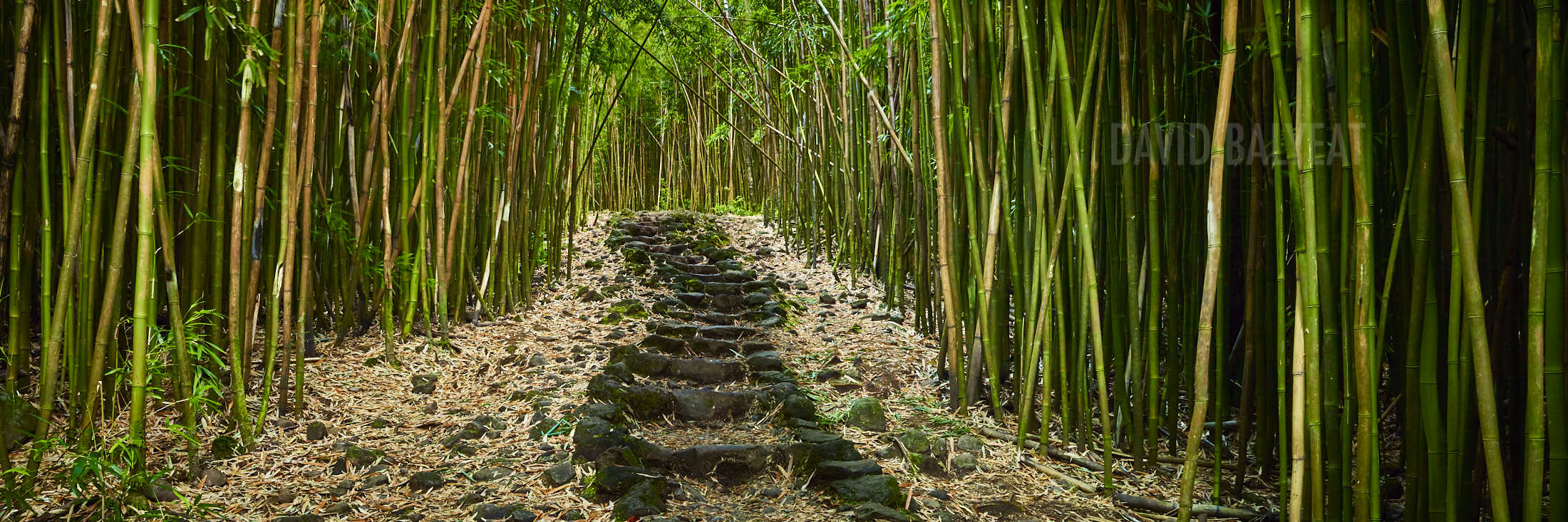 Bamboo forest steps to enlightenment david balyeat photography bamboo forest hana haleakala national park maui hawaii high definition hd professional landscape photography publicscrutiny Gallery