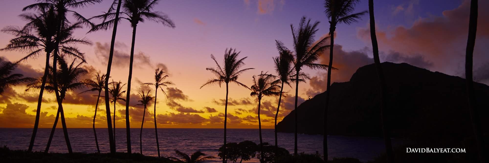 Palm trees Mokapu'u beach park hawaii panoramic sunrise high definition HD professional photography