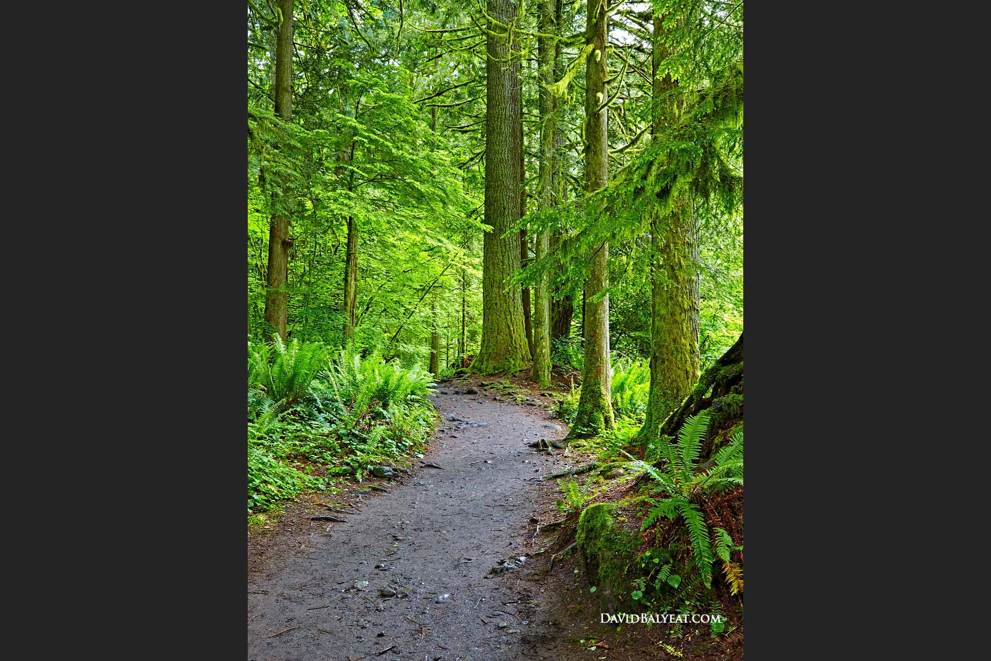 Seattle And Washington State David Balyeat Photography