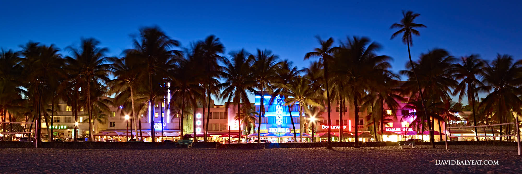 New Release South Beach Palms